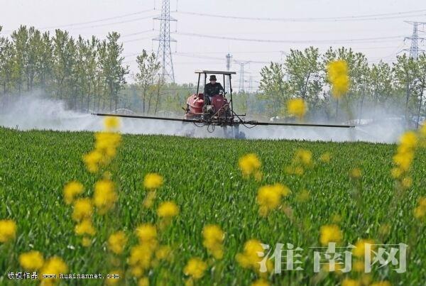 qiang春光绘春景